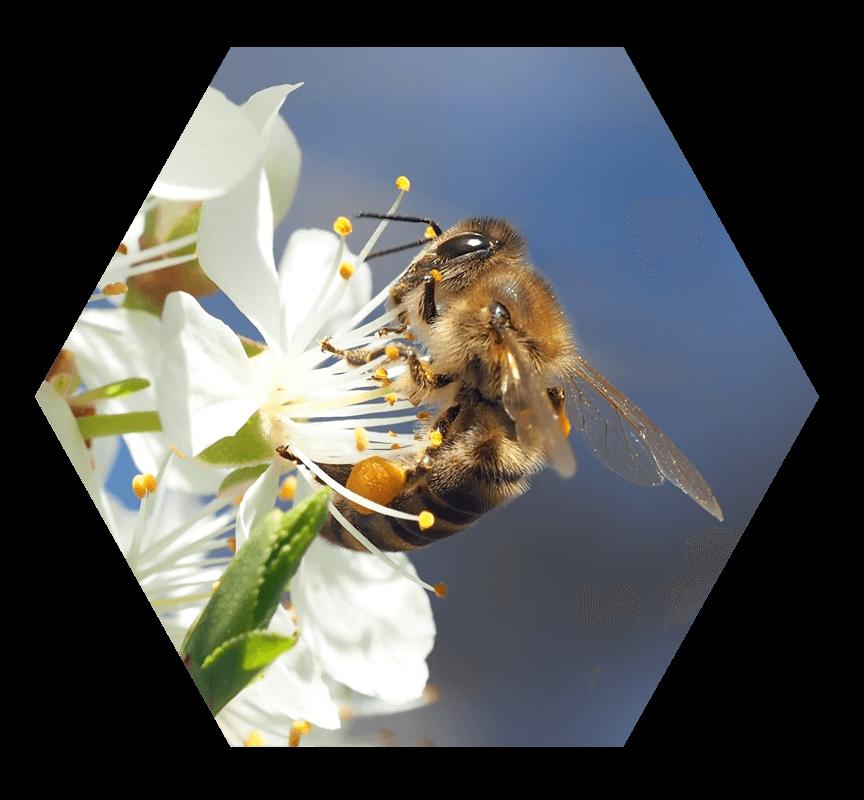 miel-de-france-apiluberon